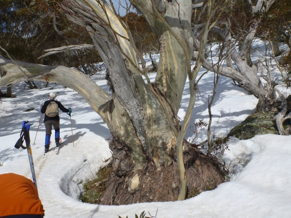 Bushwalking meets skiing