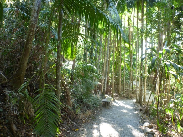 Mt Tambourine Rainforest